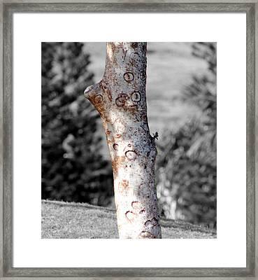 Tree Circles Framed Print by Elizabeth  Doran