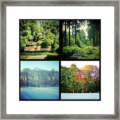 Tree Collection Framed Print