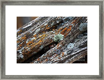 Tree Colors Framed Print by John Rizzuto
