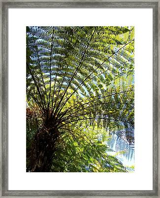 Framed Print featuring the photograph Tree Fern by Peter Mooyman