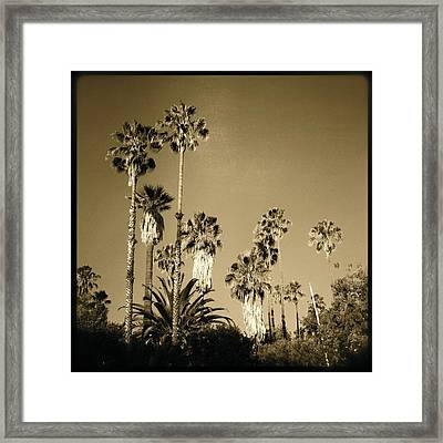 Tree Forest Framed Print by Ann Marie Donahue