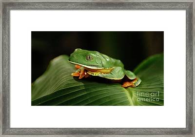 Tree Frog 1 Framed Print by Bob Christopher