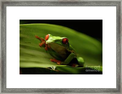 Tree Frog 10 Framed Print by Bob Christopher