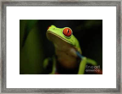 Tree Frog 6 Framed Print by Bob Christopher