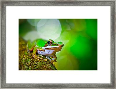 Tree Frog Framed Print by Albert Tan photo