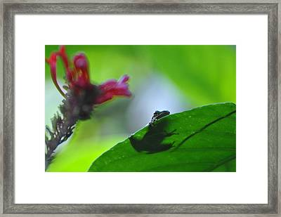 Framed Print featuring the photograph Tree Frog Peeking Over Leaf by Jodi Terracina