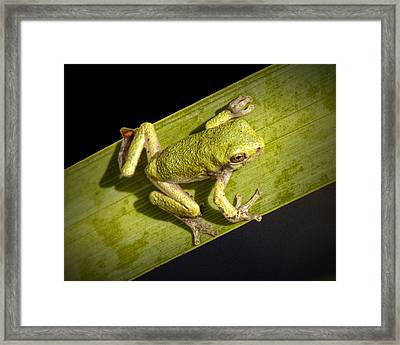 Tree Frog Sitting On A Green Leaf Framed Print by Randall Nyhof