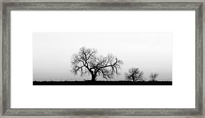 Tree Harmony Black And White Framed Print by James BO  Insogna