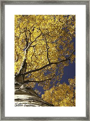 Tree Hugger Framed Print by Justin  Curry