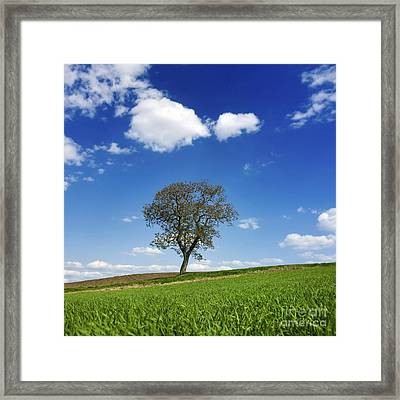 Tree In A French Landscape Framed Print