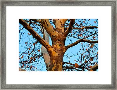 Framed Print featuring the photograph Tree In Camo by Rachel Cohen