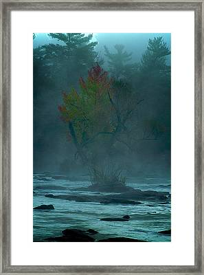 Tree In Fog Framed Print by Andre Faubert