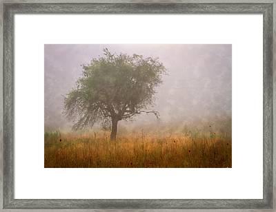 Tree In Fog Framed Print by Debra and Dave Vanderlaan