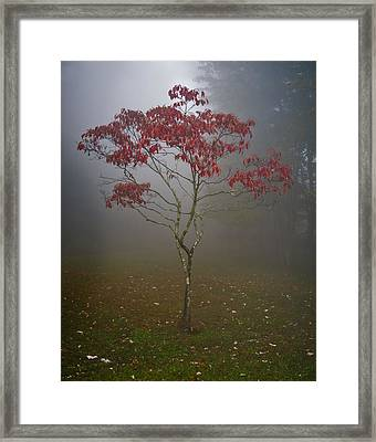 Tree In Fog Framed Print