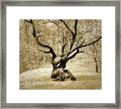 Tree In The Forest Framed Print by Susan Leggett