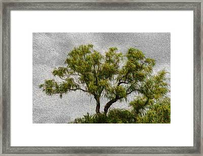 Tree In The Wind Framed Print by Celso Bressan