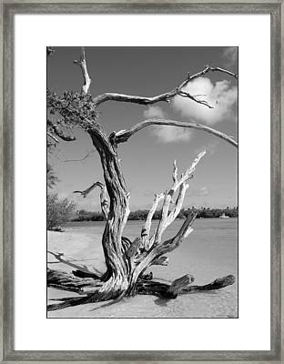 Tree In Tobago Framed Print by Julie VanDore