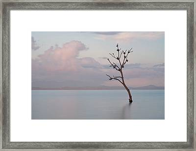 Tree In Water Framed Print by Flash Parker