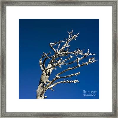 Tree In Winter Against A Blue Sky Framed Print