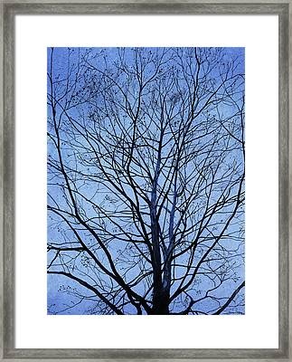 Tree In Winter Framed Print by Andrew King