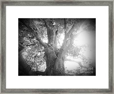 Tree Framed Print by Jeremy Wells