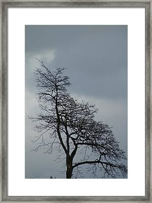 Framed Print featuring the photograph Tree by Jerry Cahill