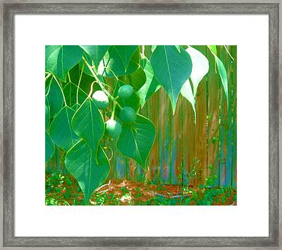 Tree Leaves Framed Print by Juliana  Blessington