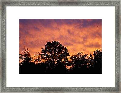 Tree Lined Skies Framed Print