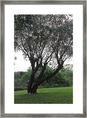 Tree Framed Print by Lorenzo Muriedas