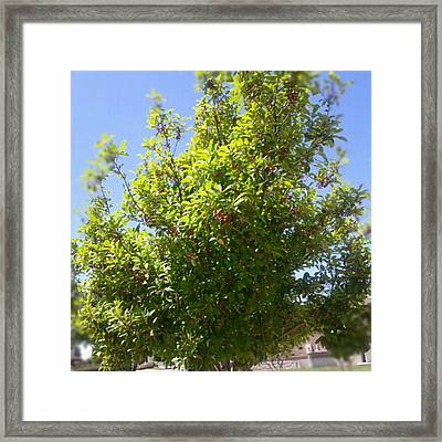 #tree #nature #andrography #nexuss Framed Print by Kel Hill