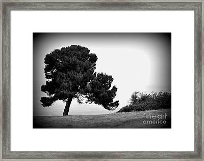 Tree Framed Print by Nicky Dou