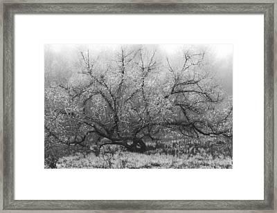 Tree Of Enchantment Framed Print by Debra and Dave Vanderlaan