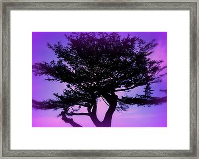 Tree Of Glory Framed Print by Cindy Wright