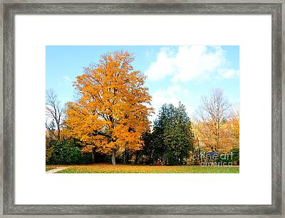 Framed Print featuring the photograph Tree Of Gold by Joe  Ng