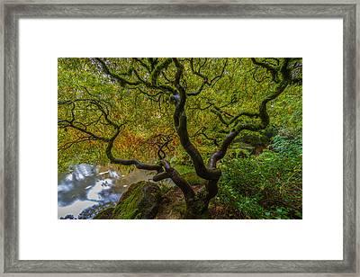 Tree Of Life Framed Print by Ken Stanback