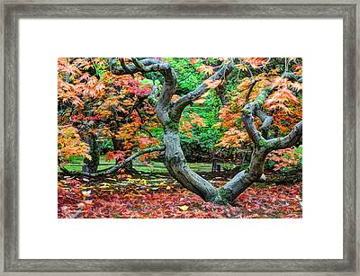 Tree Of Life Framed Print by Sarai Rachel
