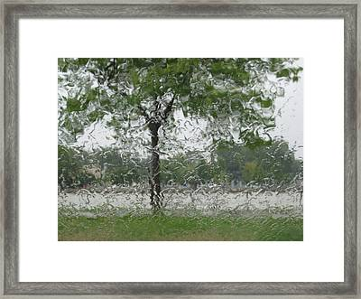 Tree Of Life Stands In A Storm Framed Print by Judy Via-Wolff