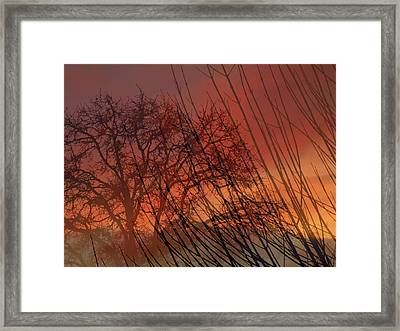 Framed Print featuring the photograph Tree Of Life Sunset by Cindy Wright