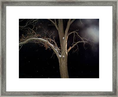 Tree On A Dark Snowy Night Framed Print by Victoria Sheldon