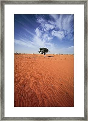 Tree On Landscape Framed Print by Tonystrong