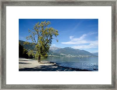 Tree On The Beach Framed Print