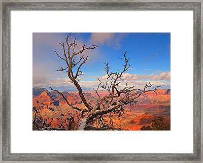 Tree Over Grand Canyon Framed Print