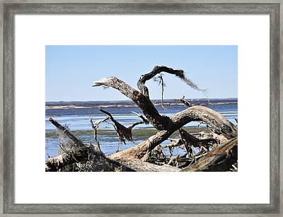 Tree Parts Framed Print by Tiffney Heaning