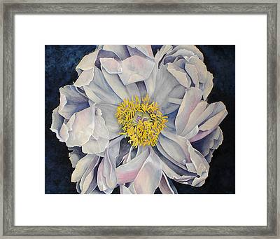 Tree Peony Framed Print by Yvonne Scott