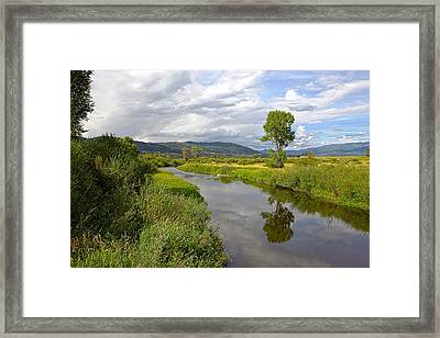 Tree Reflection Framed Print by James Steele