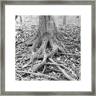Tree Roots And Leaves Framed Print by Holden Richards