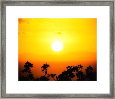 Tree-scape Sunset Framed Print