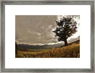 Tree Framed Print by Scott Askins