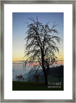 Tree Silhouette At Sunset 2 Framed Print by Bruno Santoro