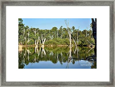 Tree Stumps In The River Framed Print by Kaye Menner
